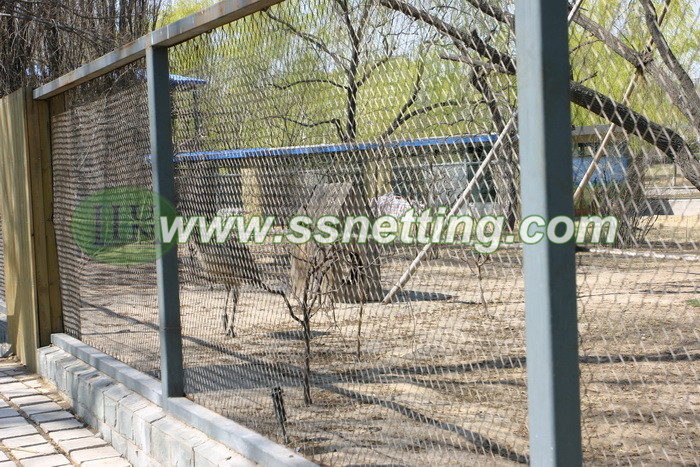China Ostrich netting suppliers and manufacturer sale 2.4mm, 76mm x 76mm wire rope netting mesh products