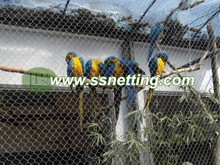 Parrots Cage Netting