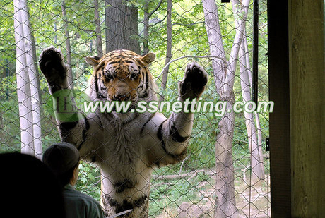 tiger enclosure mesh (4).jpg