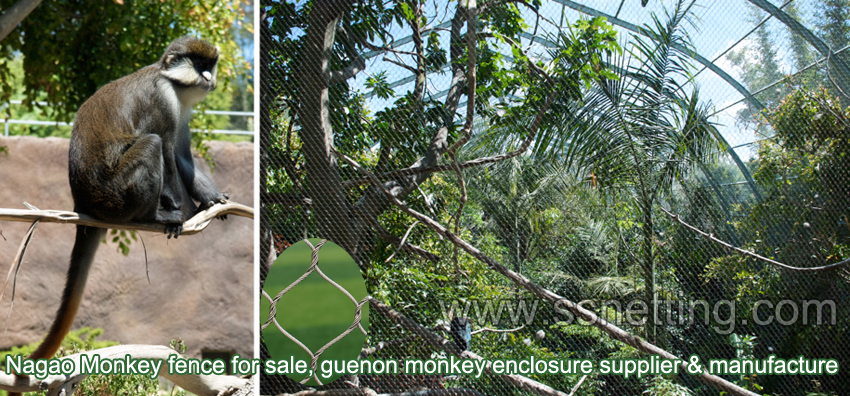 Primates monkeys enclosure mesh reform selection.jpg