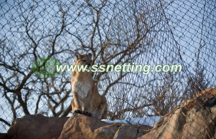 African Lion fence, Panthera leo enclosure, African lion enclosure