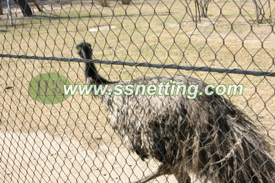 Ostrich cage netting, zoo Ostrich fence