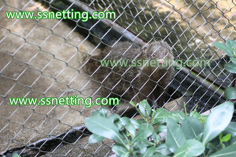 Stainless steel wire rope mesh for zoo mesh.jpg