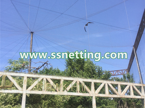 Stainless steel rope net, Zoo netting, Zoo fencing mesh – liulin wire rope netting supplier