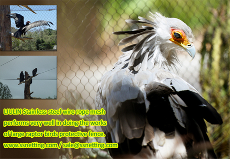 LIULIN Stainless steel wire rope mesh performs very well in doing the works of large raptor birds protective fence.jpg