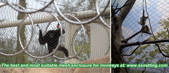 The best and most suitable mesh enclosure for monkeys
