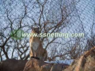 Lion Enclosure Fence Netting
