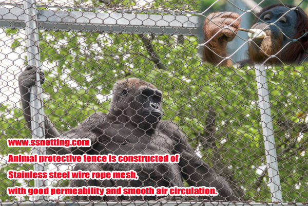 animal protective fence is constructed of Stainless steel wire rope mesh, with good permeability and smooth air circulation.