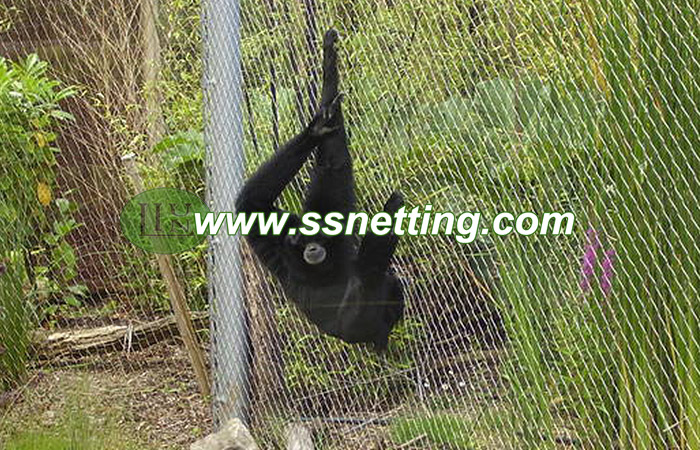 Chimpanzee fence supplier & maunfacture, Pan troglodytes enclosure for sale